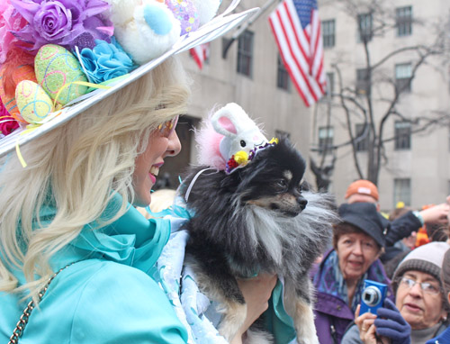 Caption. One of several costumed dogs. Copyright ©2013 Ruth Lor Malloy