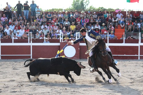 385. Report on Toronto's First Portuguese Bull Fight Festival 2013